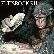 Примат